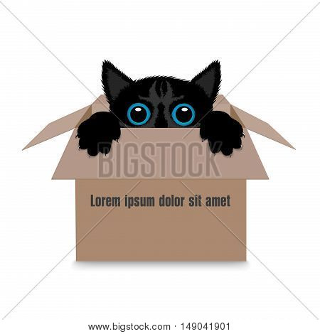 On the image it is presented kitten in a box