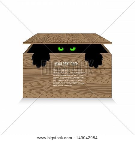 On the image it is presented angry cat in a wooden box