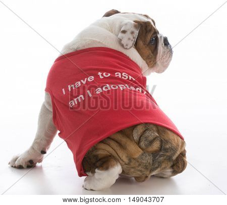 adorable puppy wearing shirt that says