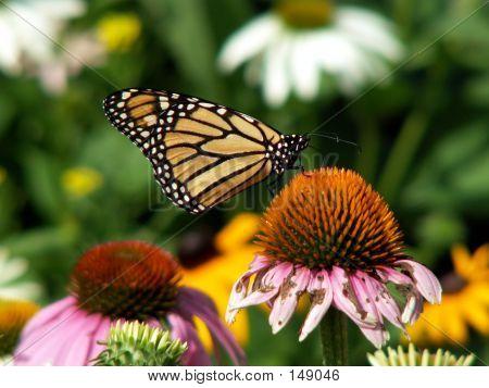 Hermosa mariposa, flor fea