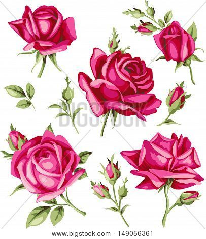 Vintage red rose and bud set. Vector flowers