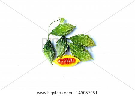 bitter gourd nature isolated on white background