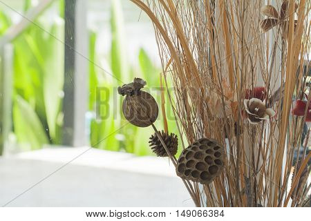 background nature plant be dried decorate at home