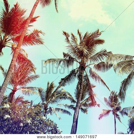 palm trees vintage effect palm trees vintage effect