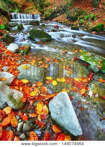 Autumnal forest rocks covered with moss fallen leaves. Mountain river with rapids and waterfalls at autumn time. Carpathian.