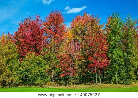 Golden autumn in French Canada.  Multi-colored crowns of the trees stand out beautifully against the blue sky. The concept of automobile tourism