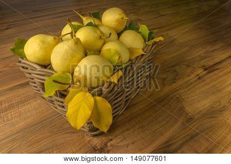 Fruit. Fresh organic pears on old wood. Pear autumn harvest