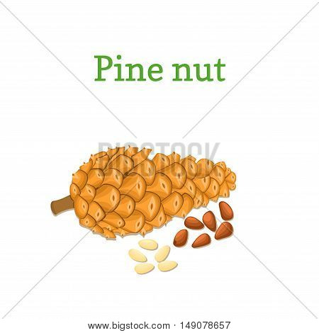 Vector pine nuts and pine cones. Vector illustration of a handful of pine nut isolated on white background it can be used as packaging design element, printing brochures on healthy and vegetarian diet