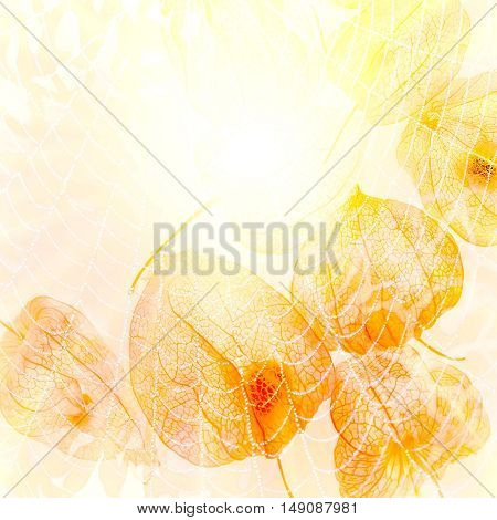 Abstract image of the sun. Sun web cape gooseberry yellow abstract background. 3D illustration