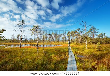 Lahemaa national park in autumn. People hiking outdoors in wild nature