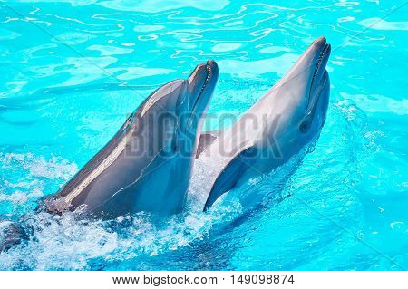 Dolphins Dancing Into Pool On Circus Show