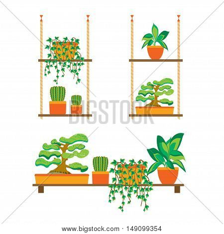 Green Plants Shelves for Home or Office. Flat Design. Vector illustration