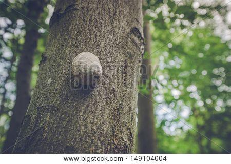 Escargot Snail On A Tree