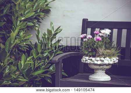 Elegant Flowerpot On A Bench