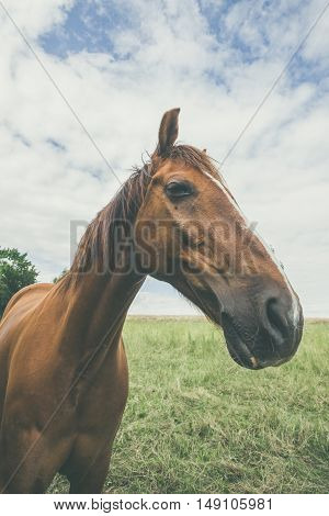 Horse With Large Head
