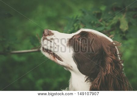 Cute Dog Portrait In A Forest