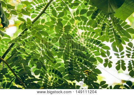 Tropical Vegetation With Green Leaves