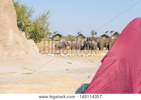 Camping close to Elephants. Selective focus on elephant herd in the background. Tent out of focus in the foreground. Adventure and wildlife safari in Africa.