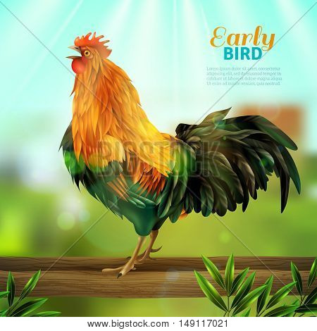Colorful vector illustration of yellow rooster with green tail feathers at village elements background flat vector illustration