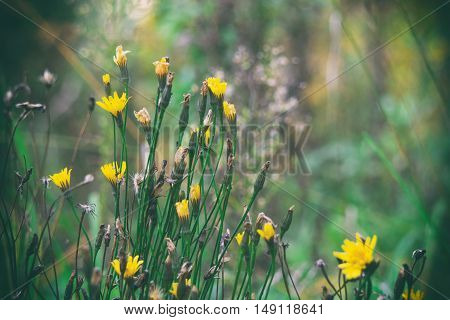 small yellow flowers in green grass blue autumn