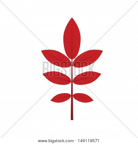 Realistic red leaf isolated on white background. The red leaves.