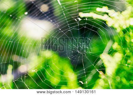 Cobweb On A Bush In The Forest Macro Photo