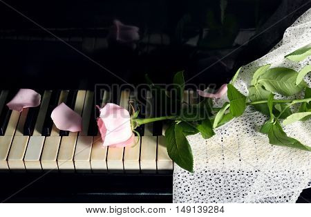 Pink rose on piano keys