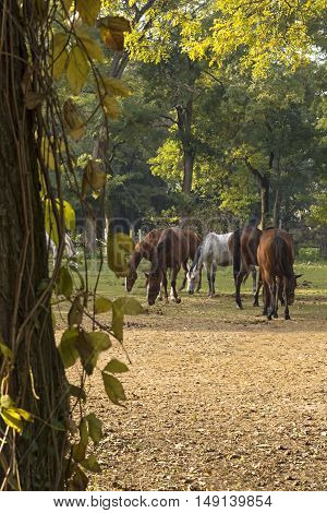 Thoroughbred horses grazing in a field in rural pastureland