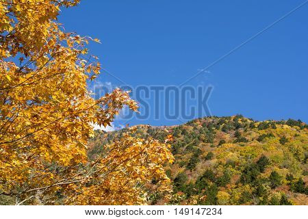 Autumn painted maple tree in front of mountain under blue sky in Nagano