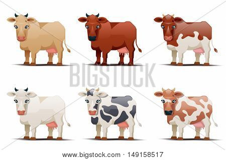 Vector cows. Cows of different colors on white background. Spotted cow illustration