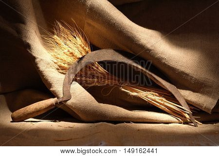 Bunch of wheat and old sickle on canvas background