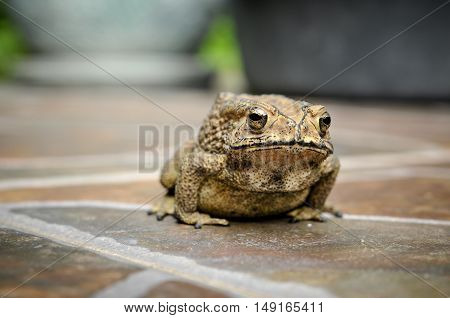 small toad on floor tile in nature