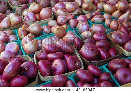 Red onions in groups of containers displayed for market