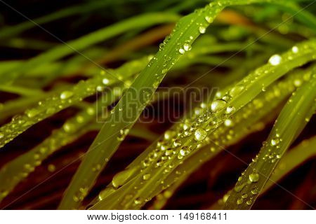 dew drops on grass gold gradients effect