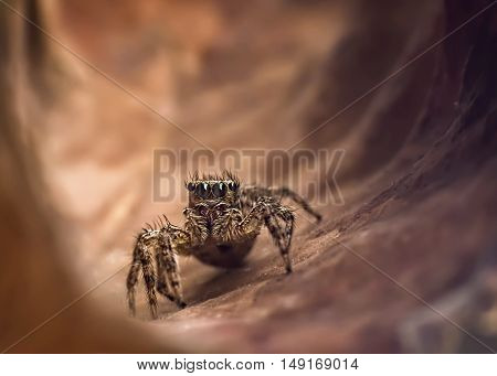 The jump spider discover for exit of tunnel