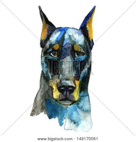 Doberman Animal dog watercolor illustration isolated on white background