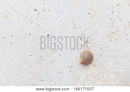 Empty brown snail shell on rough concrete floor use as texture or background.