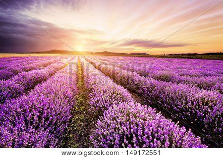 Beautiful sunrise over lavender field in Bulgaria