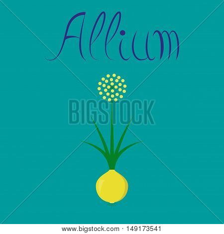 flat illustration on stylish background plant allium