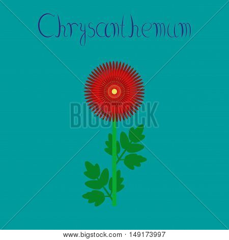 flat illustration on stylish background flower chrysanthemum