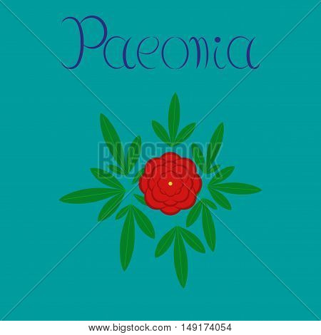 flat illustration on stylish background flower paeonia