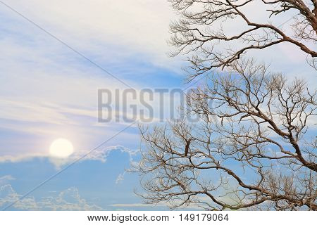 Beautiful sunrise with barren tree as background