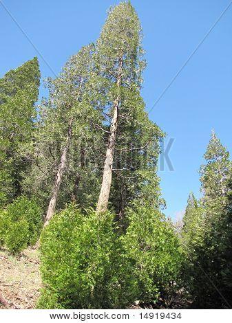 Seeley Creek Trail Trees