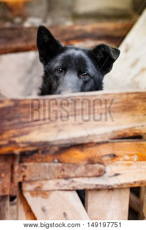 sad house dog waits an owner in a court