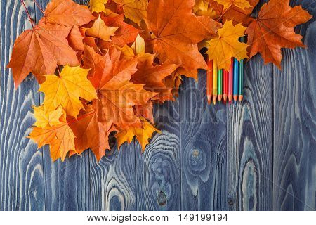 Colorful Wooden Pencils With Autumn Leafs On Wooden Table