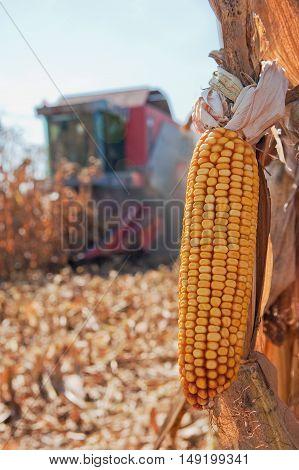 Closeup image of corn harvesting machinery working in corn field