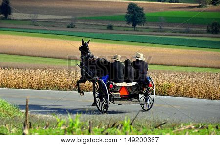 Lancaster County Pennsylvania - October 17 2015: Amish family riding in the horse and buggy passing fields of dried cornstalks and soybeans *