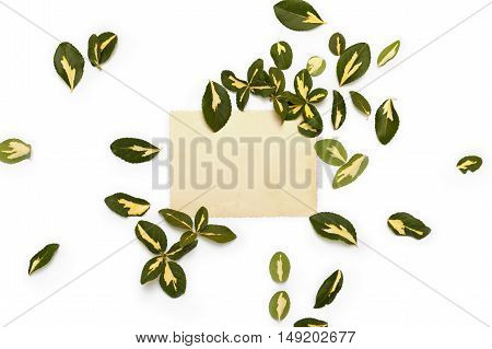 Yellow-green leaves of euonymus arranged around vintage card on white background. Flat lay top view.