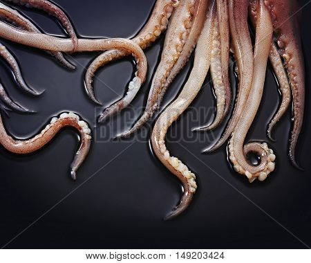 Close up of squid tentacles on a black background
