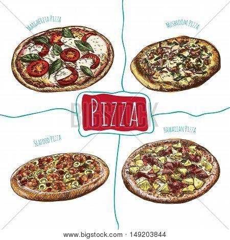 Margherita, Mushroom, Hawaiian and Seafood pizzas illustration. Vector colorful illustration of pizzas